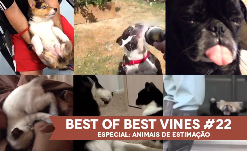 Best of Best Vines #22 – Os 10 Melhores Vines da Semana – Especial Animais de Estimação