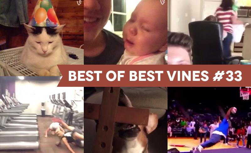 best-of-best-vines-33-os-10-melhores-vines-da-semana-blog-geek-publicitario