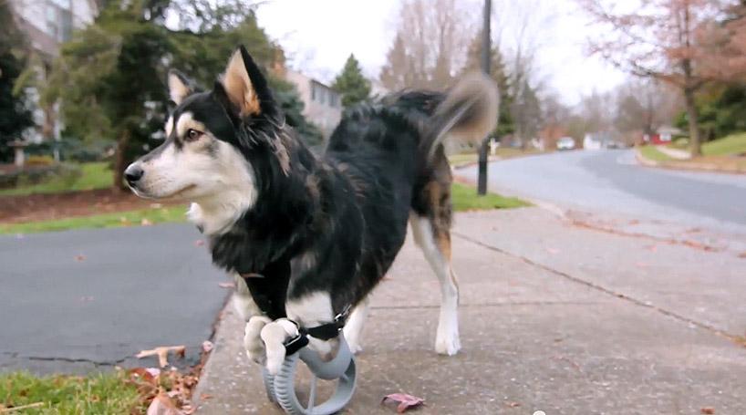 protese-impressao-3d-cachorro-derby-destaque-blog-geek-publicitario