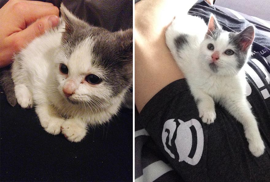 7 - Pequeno gatinho perdido