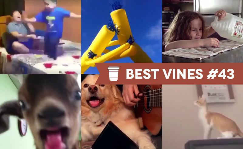 Best Vines #43 – Os 10 Melhores Vines da Semana