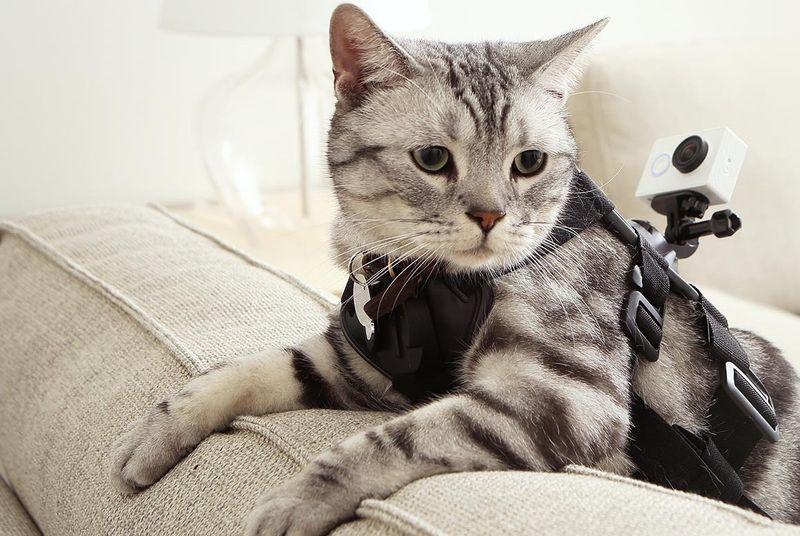 action-cam-gato-yi-xiaomi-blog-geek-publicitario