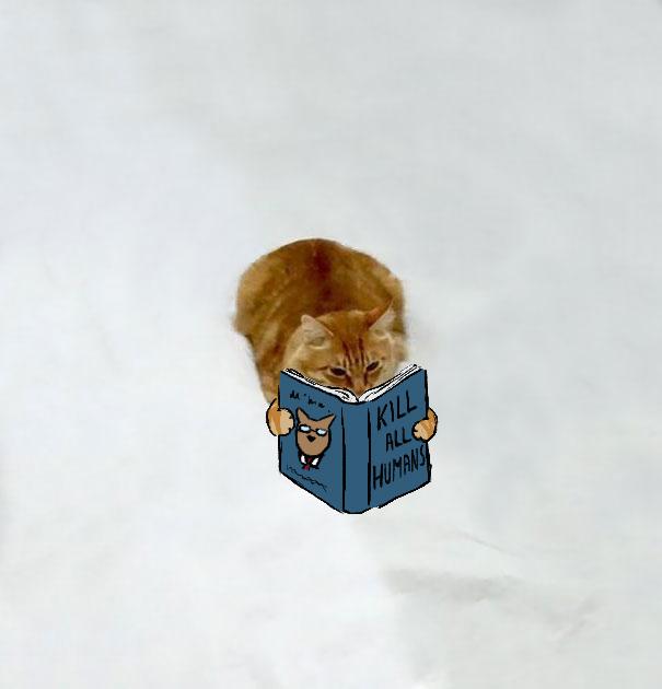 ilustracoes-em-foto-de-gato-gera-imagens-engracadas-8-blog-geek-publicitario