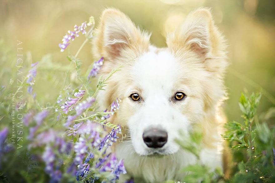 fotos-cachorros-alicja-zmysłowska-18-blog-gkpb