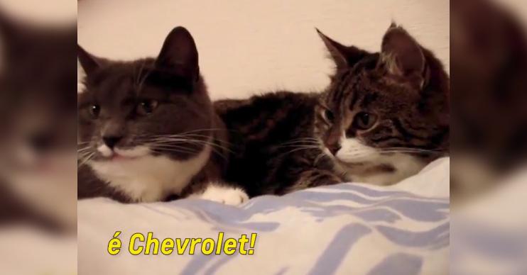 Chevrolet transforma vídeo de gatinhos em comercial