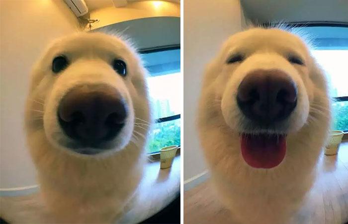 Estas fotos mostram animais de estimação antes e depois de um elogio